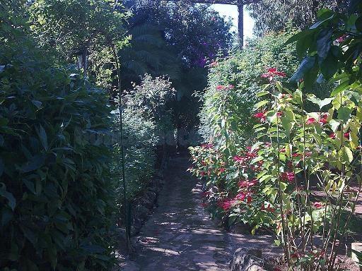 amplio jardín con variedad de vegetación
